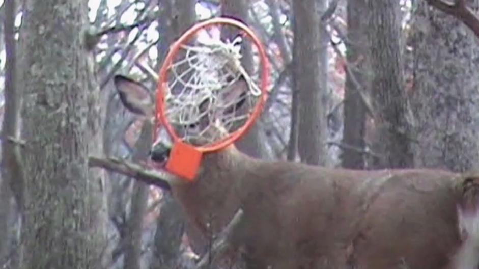 Weird Whitetails: Basketball Buck