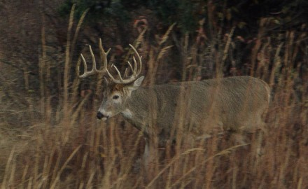 Mature bucks are a different breed of whitetail. Understanding how can make the difference between
