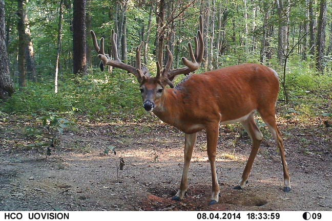 Zach Singler S 203 Inch Out Of Nowhere Buck North