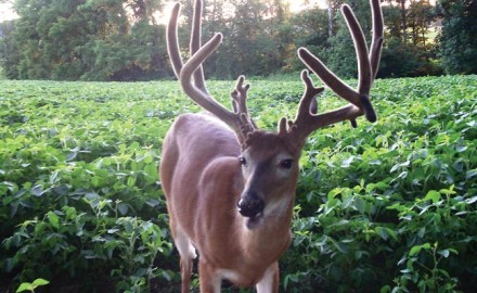 The unlikely events that led me to a 200-inch Ohio whitetail in 2014 actually began back in 2012,