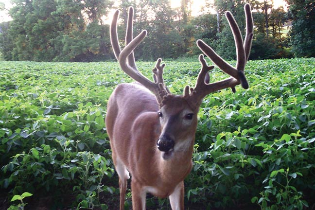 Zach Singler's 203-Inch 'Out of Nowhere' Buck