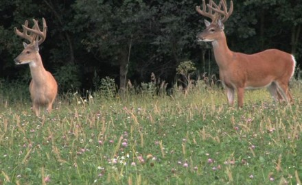 Maybe this will be the year I shoot a buck on opening day of the archery season. I've been saying