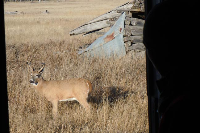 Forget The Blind And Hunker In Junk North American Whitetail