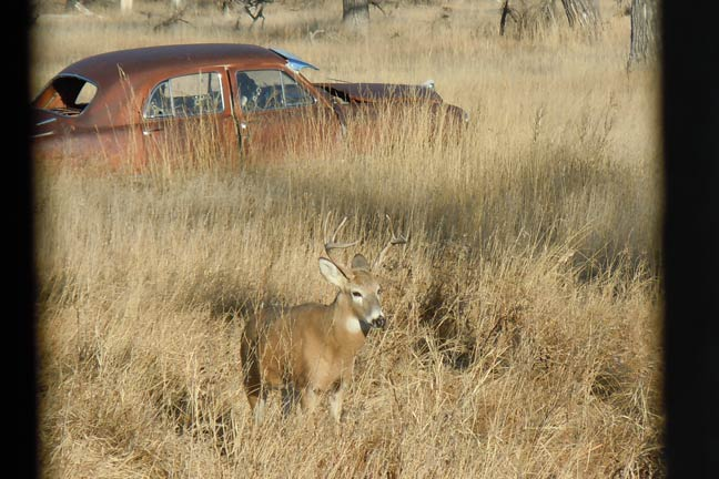 How To Scout A New Property For Deer