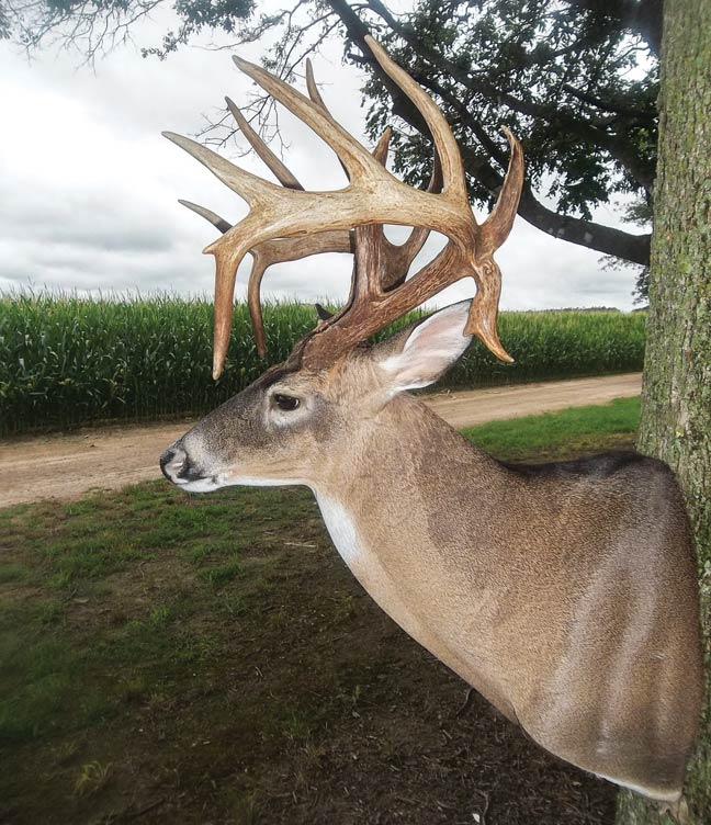 Jacob-Ayecock-Arkansas-buck