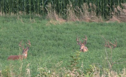 Many states offer early bowhunting season openers. This is a chance to tag a buck in velvet or take