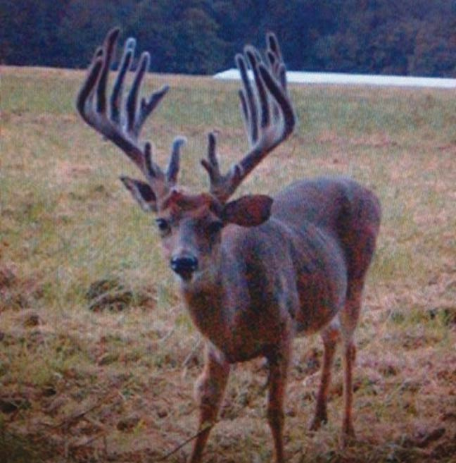 Whitelock-Maryland-buck