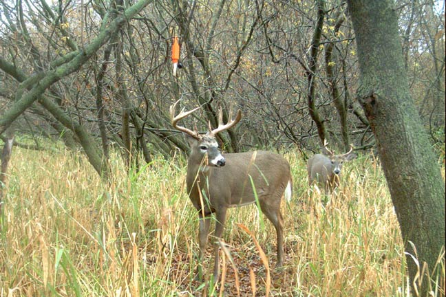 5 Reasons to Hunt October