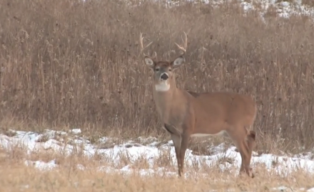 Dr. James Kroll and Pat Hogan discuss some of the lesser-known diseases that affect the whitetail
