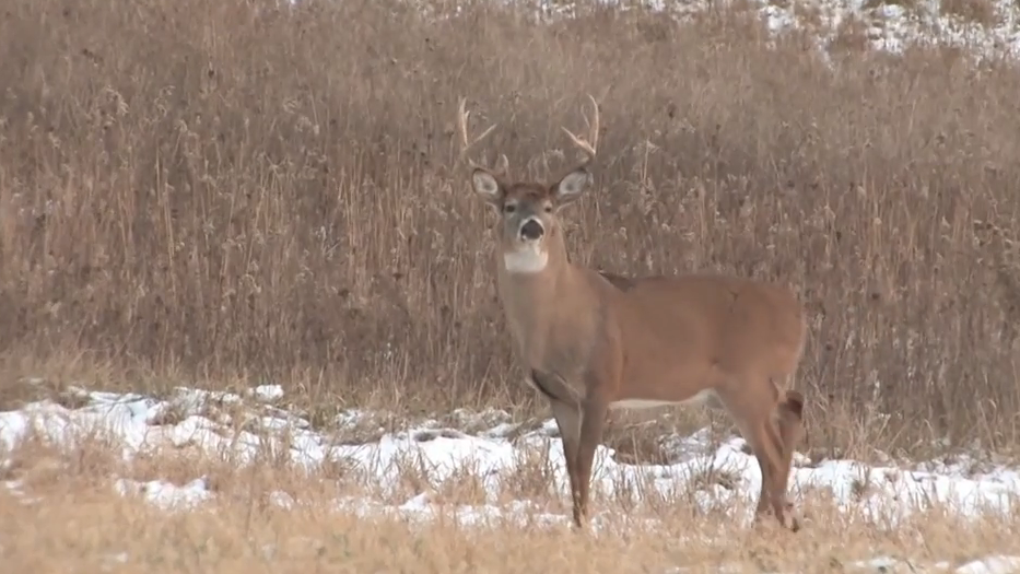 Dr. Deer: Lesser-Known Whitetail Diseases