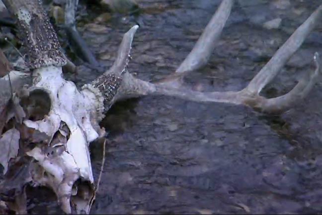 Confirmed: CWD Reduces Deer Population