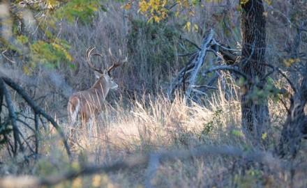 deer-management-includes-sanctuaries