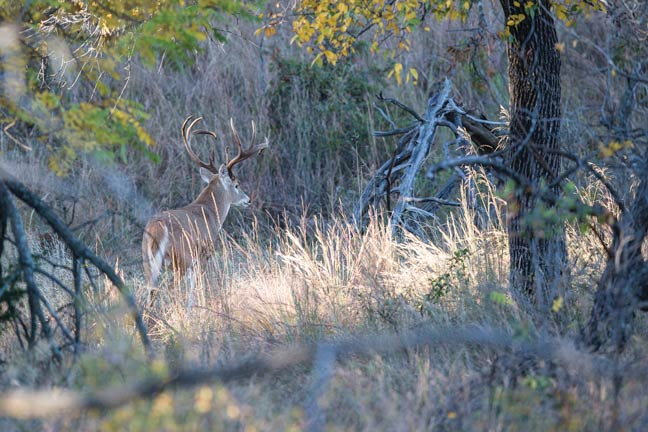 Find-Big-Bucks