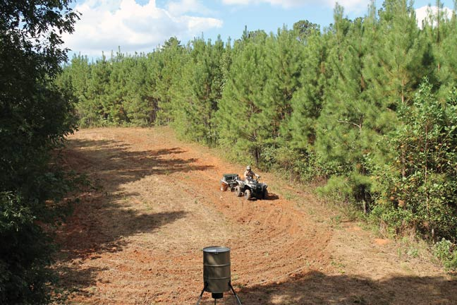 Use Food Plots for Success in the Pines