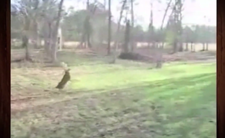 A Wisconsin man captures footage of a buck who got his antlers caught up in a rope swing.