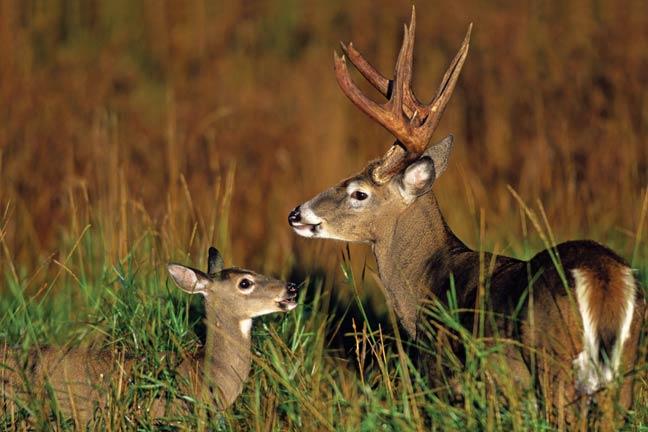 The-Deer-Ground-Plunge-2