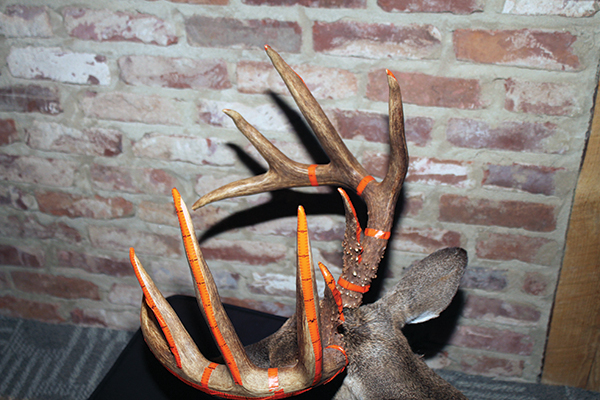 How to Score Your Buck with Trophy Tape