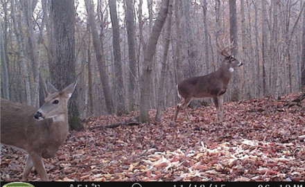 Trail-Camera-Scouting