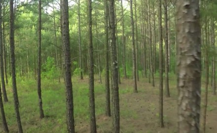 Dr. James Kroll explores the challenge of managing industrial timberland in Alabama.