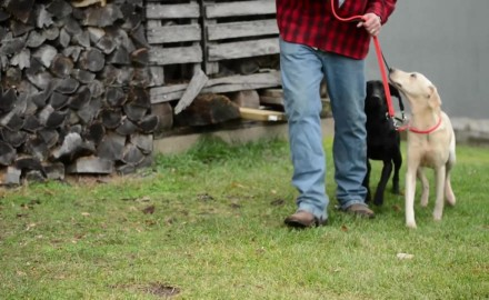 Jeremy Moore offers training methods for dealing with dogs that are excitable.