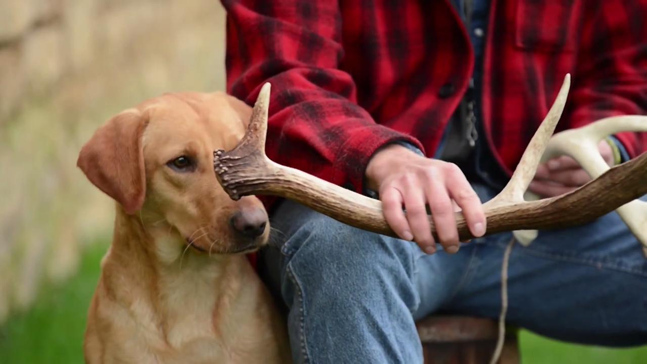 Deer Dog: Sheds All Work the Same