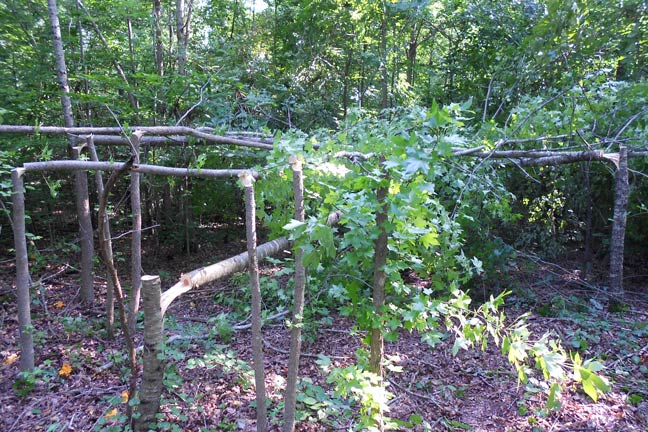 A Guide to Food Plot Alternatives