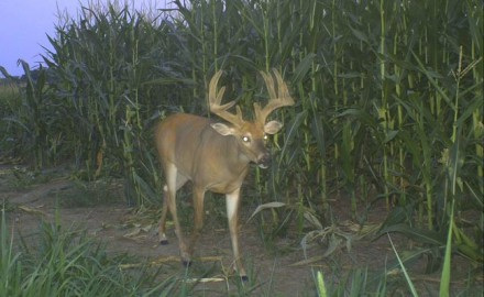 Trail cameras in these spots will provide you with valuable information!