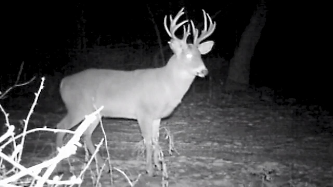 Dr. Deer: When Bucks Become Nocturnal