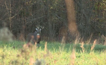 Mike Clerkin likes to hunt whitetails aggressively even if it means hunting in windy conditions.