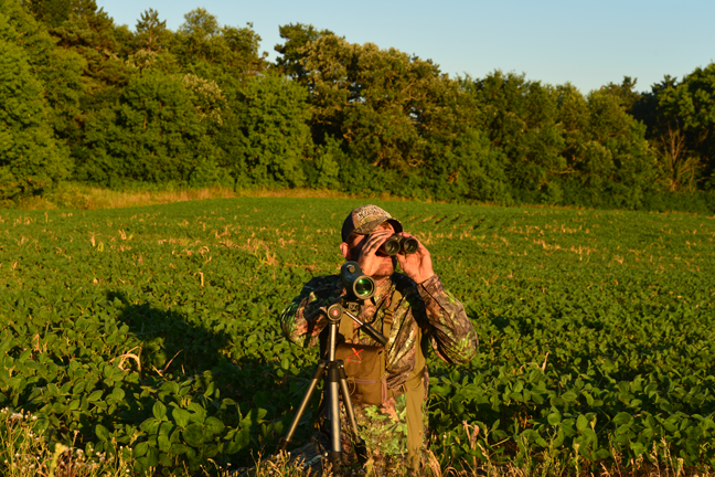 Use Summer Glassing for Whitetail Scouting