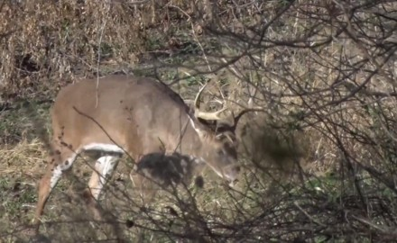 Stan Potts waits it out in Illinois for a chance at the right buck during the second gun season.