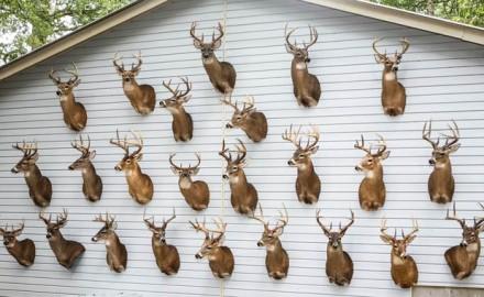 South-Carolina-Hunting