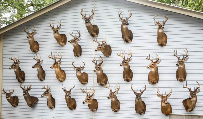 South Dakota Department Of Natural Resources Hunting