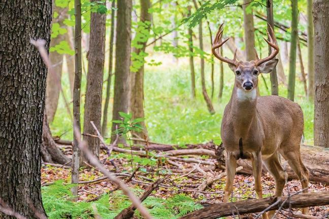 Wayne-National-Forest-Lead