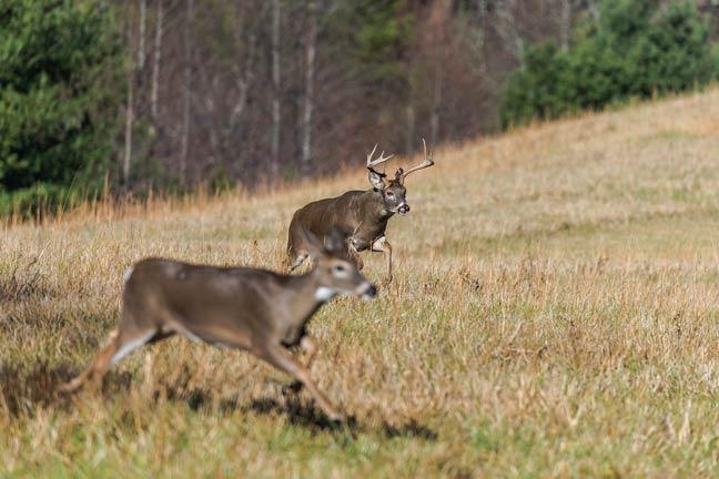 Part-2-Lesson-Learned-2016-Deer-Rut-Lead