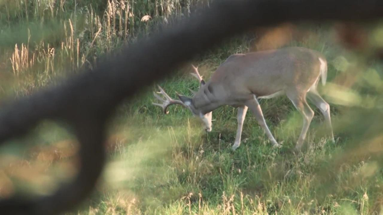 Dr. Deer: Feeding Patterns in Cold Weather