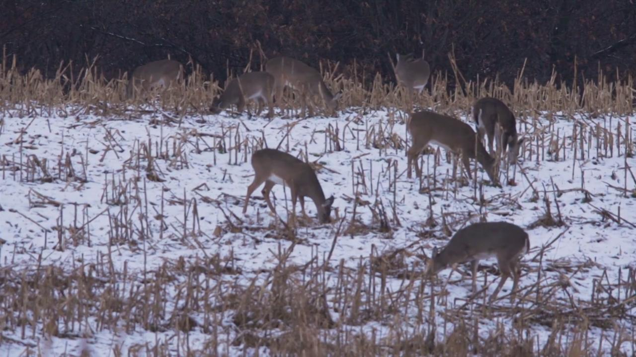 Dr. Deer: Whitetail Breeding Behavior