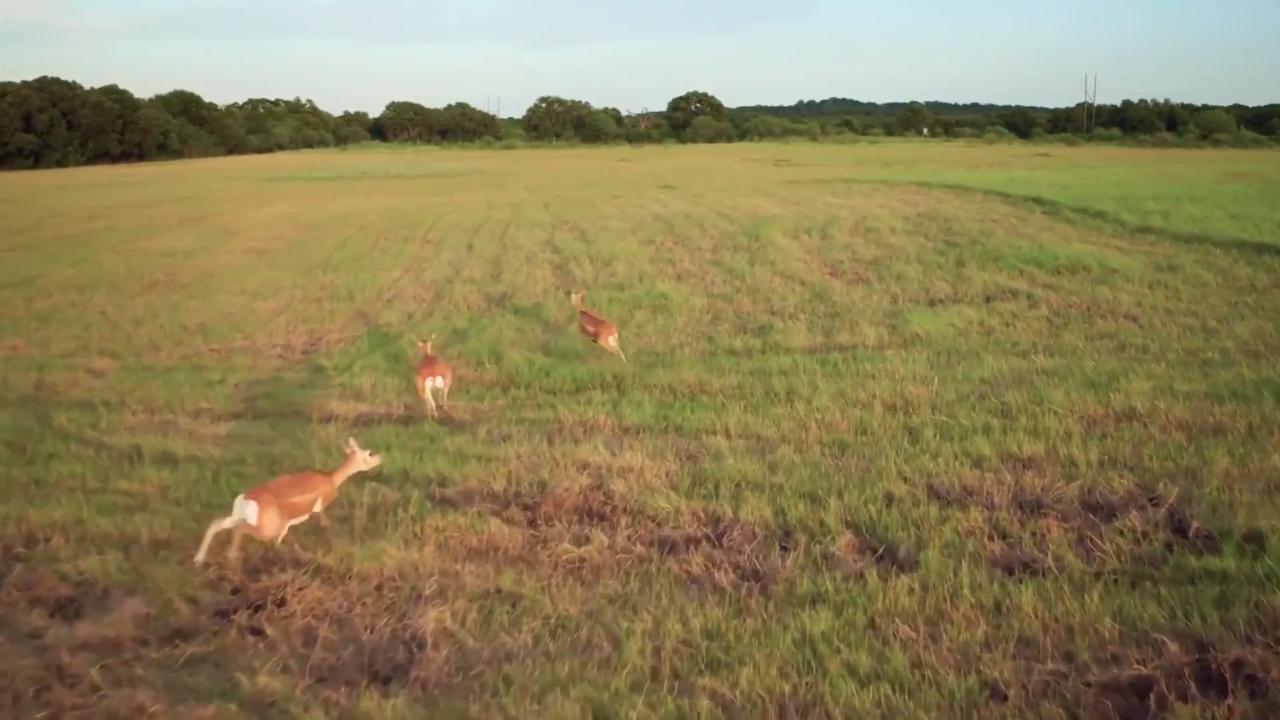 Texas Pre-Rut Handgun Whitetail Hunt