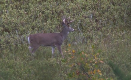 James Kroll and Pat Hogan discusses what a buck's body language can tell you.