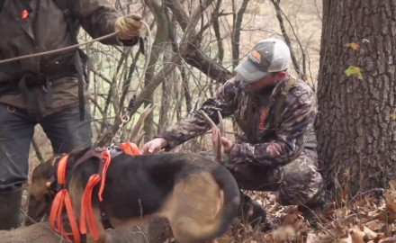 Jeremy Moore offers up advice on late-season training opportunities for your deer dog.