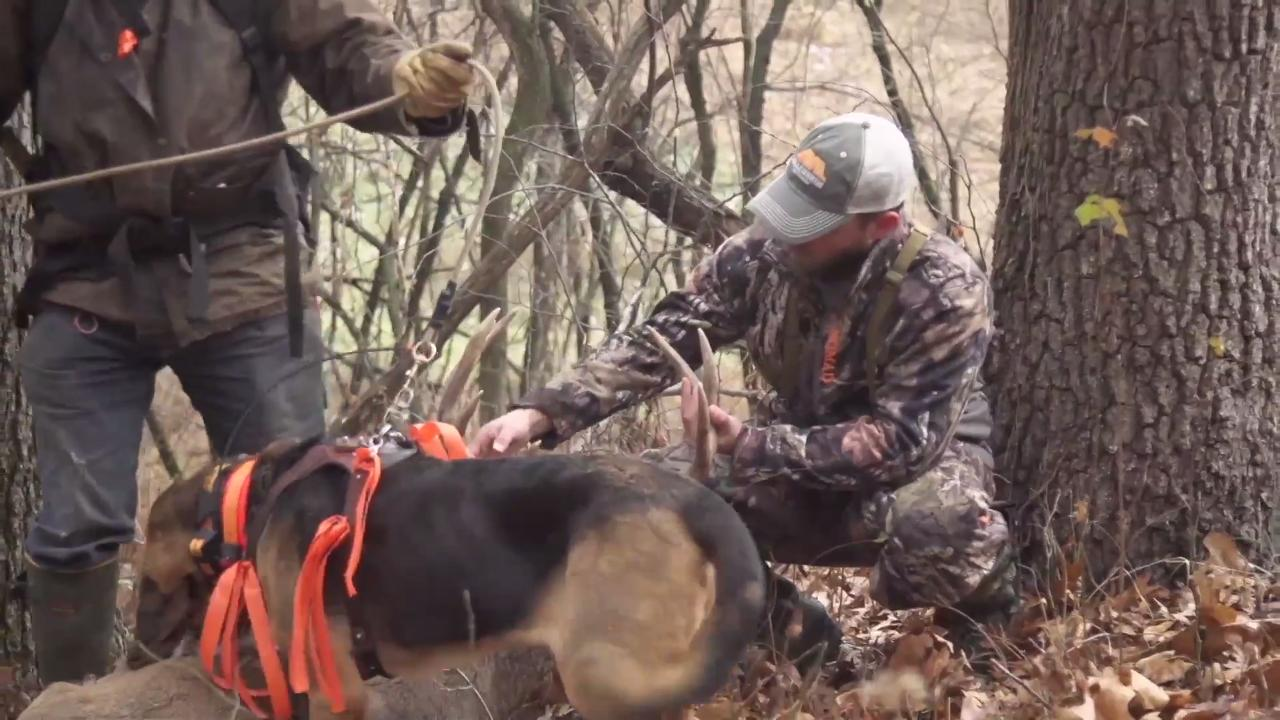 Deer Dog: Late-Season Opportunities