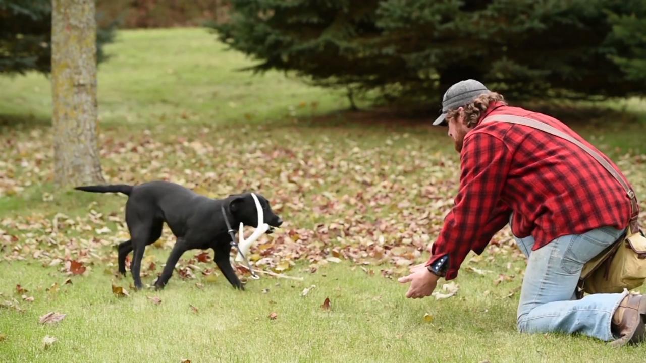 Deer Dog: Replicating Realistic Tracks