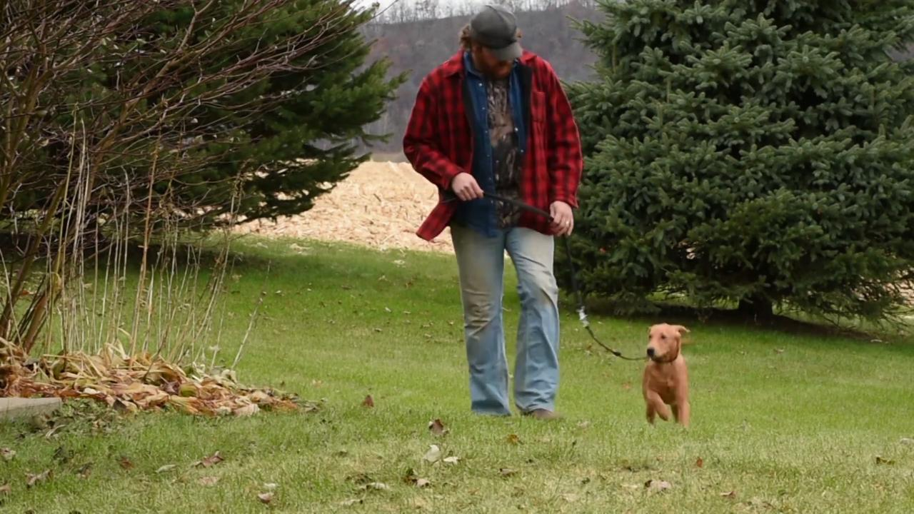 Deer Dog: Tracking Leads and Leashes