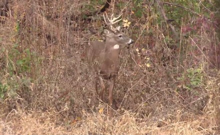 Mike Clerkin goes in search of Midwestern whitetails in Illinois.