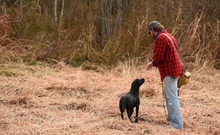 Jeremy Moore offers tips on how to train your deer dog to drive through barriers and into heavier
