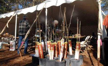 By planting a variety of fruit and nut trees ' particularly when the Dunstan Chestnut tree is involved ' a landowner can create a deer hunting magnet that provides both nutritional and attractant value for white-tailed deer in the area.
