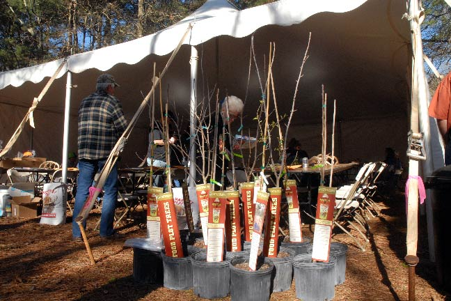 Using Chestnut Trees and Other Mast Crops to Create Deer Magnets