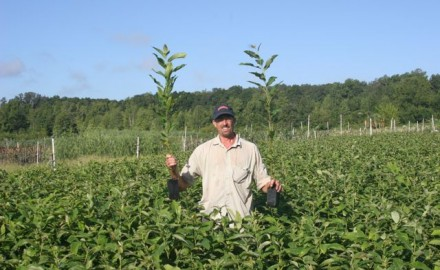 Using Chestnut Trees and Other Mast Crops to Create Deer Magnets Seedbed