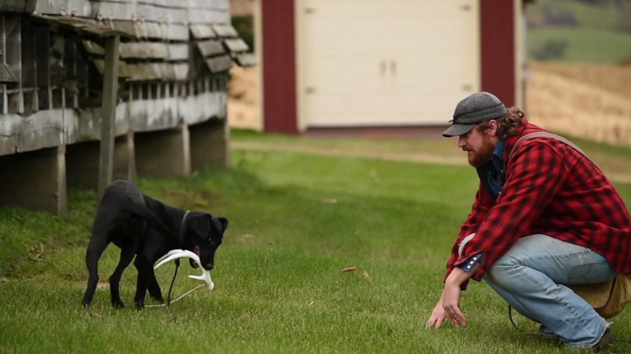 Deer Dog: Puppy Pitfalls