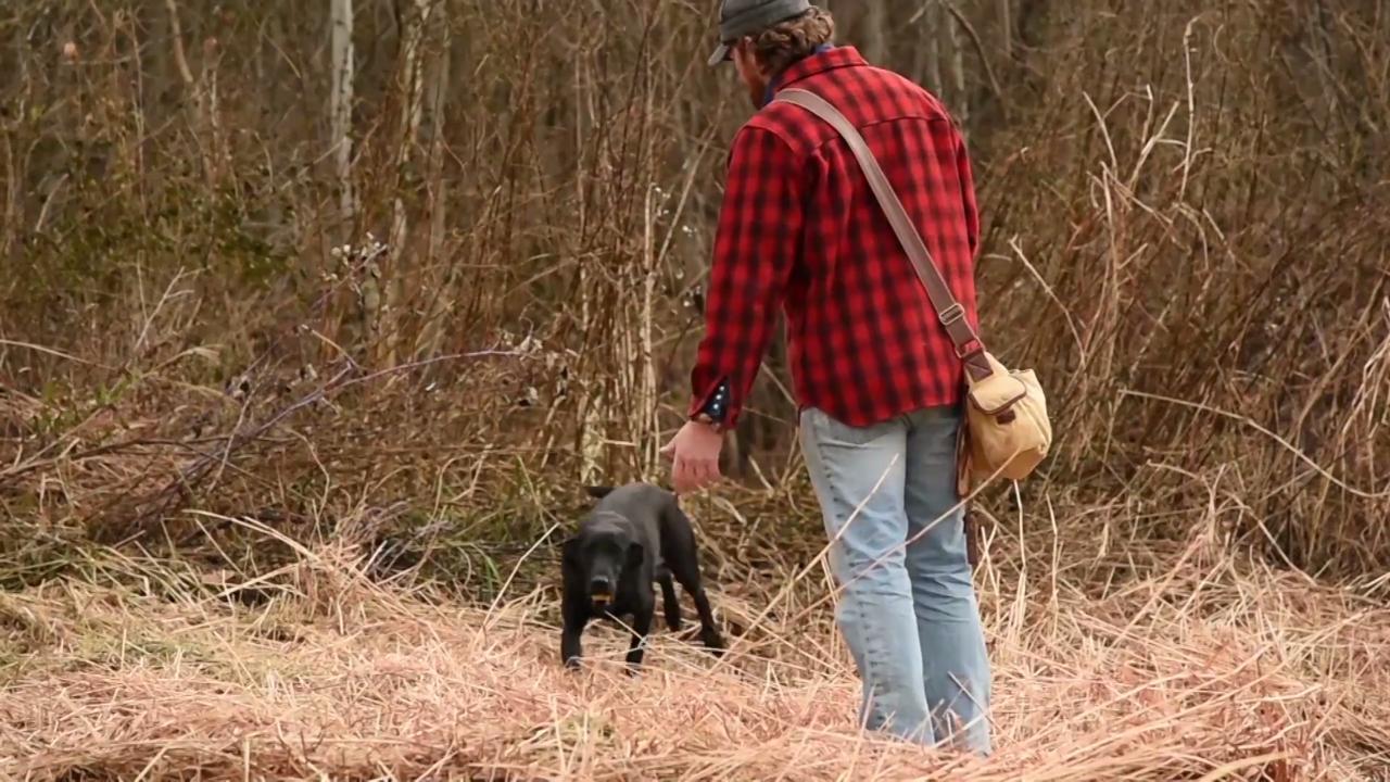 Deer Dog: Shed Dog Conditioning